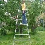 rebrík pre zberačov ovocia